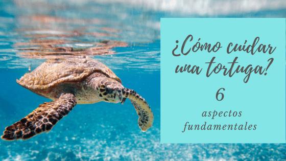 como cuidar una tortuga