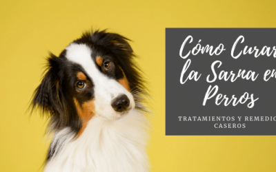 Cómo Curar la Sarna en Perros: Tratamientos y Remedios Caseros