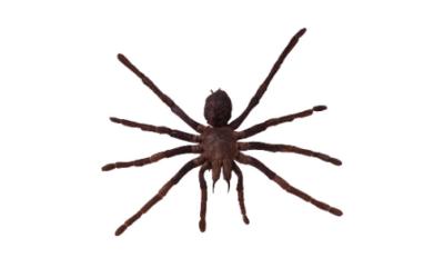 Cómo actuar cuando te pica una araña
