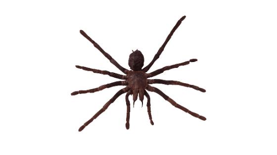 como actuar cuando te pica una araña