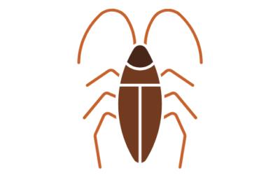 Cómo eliminar cucarachas con bicarbonato ¿Es una solución definitiva?