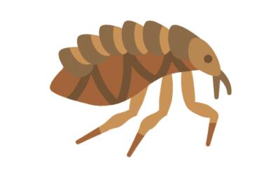 Cómo eliminar las pulgas en perros: Remedios Caseros y no tan Caseros