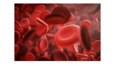 Cómo Está Compuesta la Sangre: Todos sus Rasgos Explicados