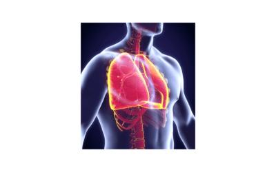 Cómo Identificar la Bronquitis: Síntomas y Tratamiento